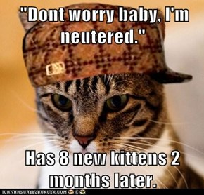 Animal Memes: Scumbag Cat - His Human Won't Pay Kitten Support