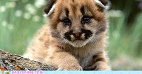 Squee Spree: Cougar Cubs are Tops!