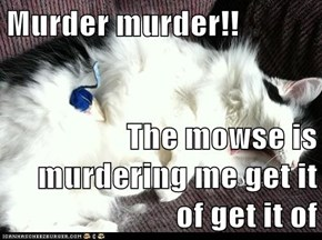 Murder murder!!  The mowse is murdering me get it of get it of