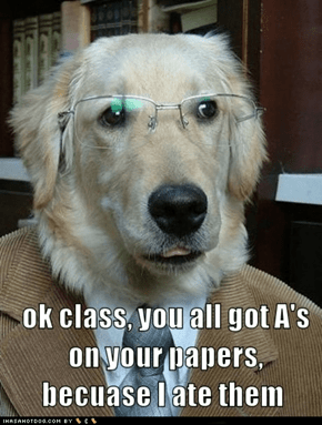 Professor Dog is Everyone's Favorite Professor