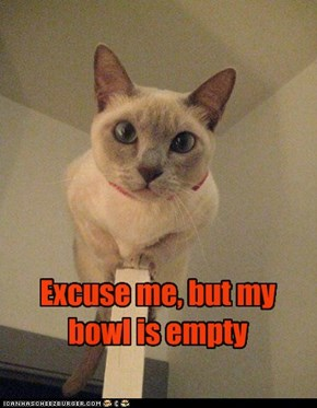 Excuse me, but my bowl is empty
