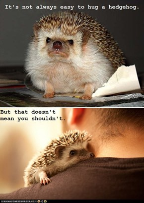 This Life Lesson Brought to You by Hedgehogs!