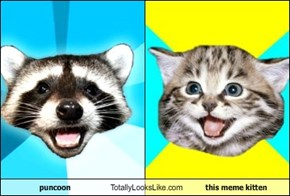 puncoon Totally Looks Like this meme kitten