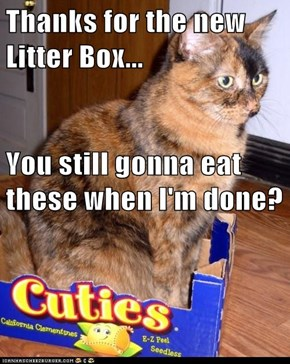 Thanks for the new Litter Box... You still gonna eat these when I'm done?