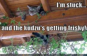 I'm stuck...