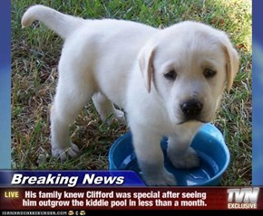 Breaking News -  His family knew Clifford was special after seeing him outgrow the kiddie pool in less than a month.