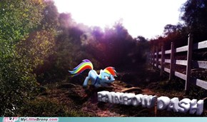 The Nature of Rainbow Dash