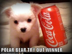 POLAR BEAR TRY OUT WINNER