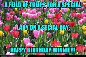 A FEILD OF TULIPS FOR A SPECIAL    LADY ON A SECIAL DAY.   HAPPY BIRTHDAY WINNIE!!!