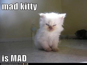 mad kitty  is MAD