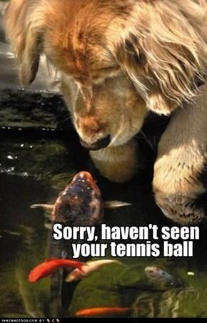 I Has A Hotdog: Ur Not Veri Helpfull Fishy...