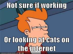 Not sure if working  Or looking at cats on the internet