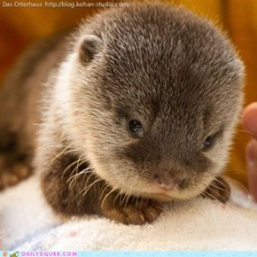 Squee Spree: Come Hither