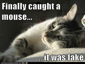 Finally caught a mouse...