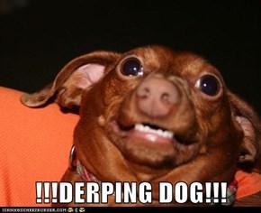 !!!DERPING DOG!!!