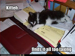 Kitteh finds it all too taxing