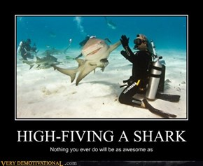 HIGH-FIVING A SHARK