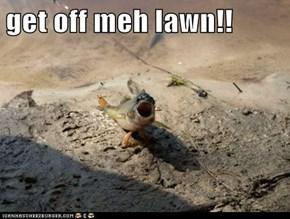 get off meh lawn!!