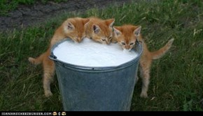 "Cyoot Kittehs of teh Day: The Local ""Watering"" Hole"