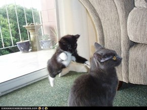Cyoot Kittehs of teh Day: Ninja Cat Strikes Again