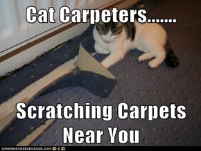 Cat Carpeters.......  Scratching Carpets Near You