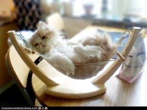 Cyoot Kitteh of teh Day: Chillin' Like a Villain