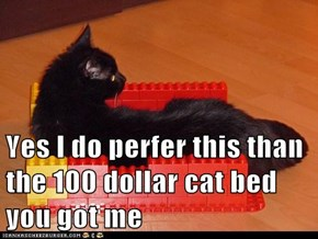 Yes I do perfer this than the 100 dollar cat bed you got me