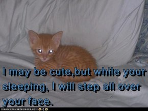 I may be cute,but while your sleeping, I will step all over your face.