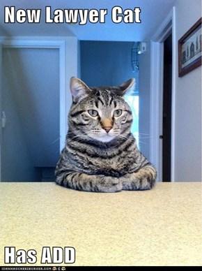 New Lawyer Cat  Has ADD