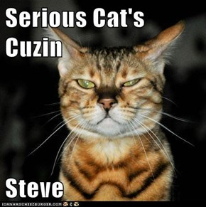 Serious Cat's Cuzin  Steve