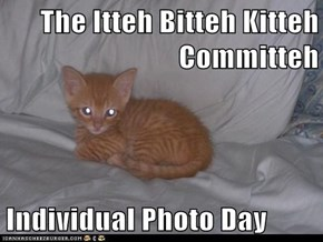 The Itteh Bitteh Kitteh Committeh  Individual Photo Day