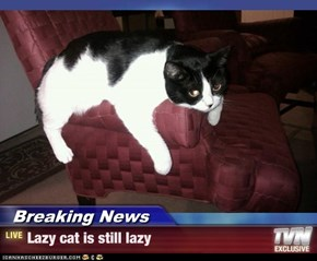 Breaking News - Lazy cat is still lazy