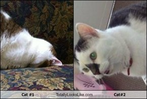 Cat #1 Totally Looks Like Cat#2