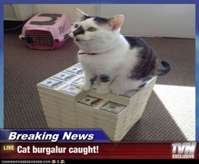 Breaking News - Cat burgalur caught!