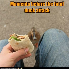 Moments before the fatal duck attack