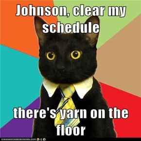 Animal Memes: Business Cat - I'm All Tied Up at the Moment