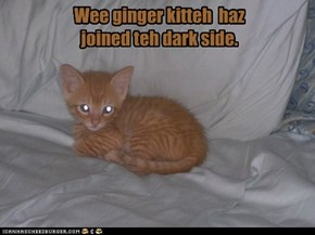 Wee ginger kitteh  haz joined teh dark side.