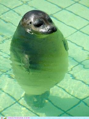 Daily Squee: Fatty Torpedo