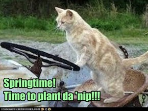 Springtime!    Time to plant da 'nip!!!