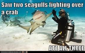 Nice One, Shark!