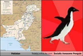 Pakistan Totally Looks Like Socially Awesome Penguin