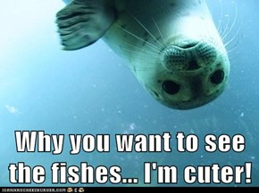 Why you want to see the fishes... I'm cuter!