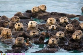Daily Squee: A Flotilla of Otters