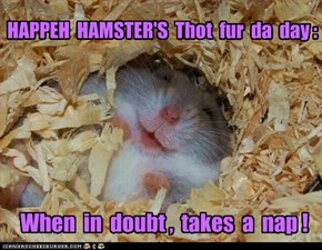 Happeh Hamster, Wut Is Your Saje-lee Advise?