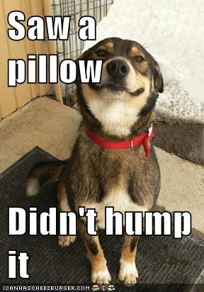 Saw a pillow  Didn't hump it