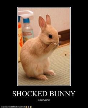 SHOCKED BUNNY
