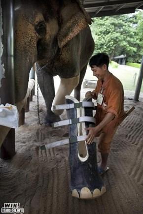 Elephant Leg WIN