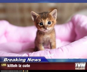 Breaking News - kitteh iz cute