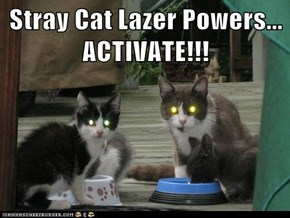 Stray Cat Lazer Powers...                 ACTIVATE!!!