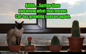 Ahhh.....Spring time